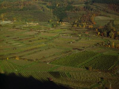 Weingärten Kamptal