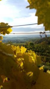 Blick vom Weingarten